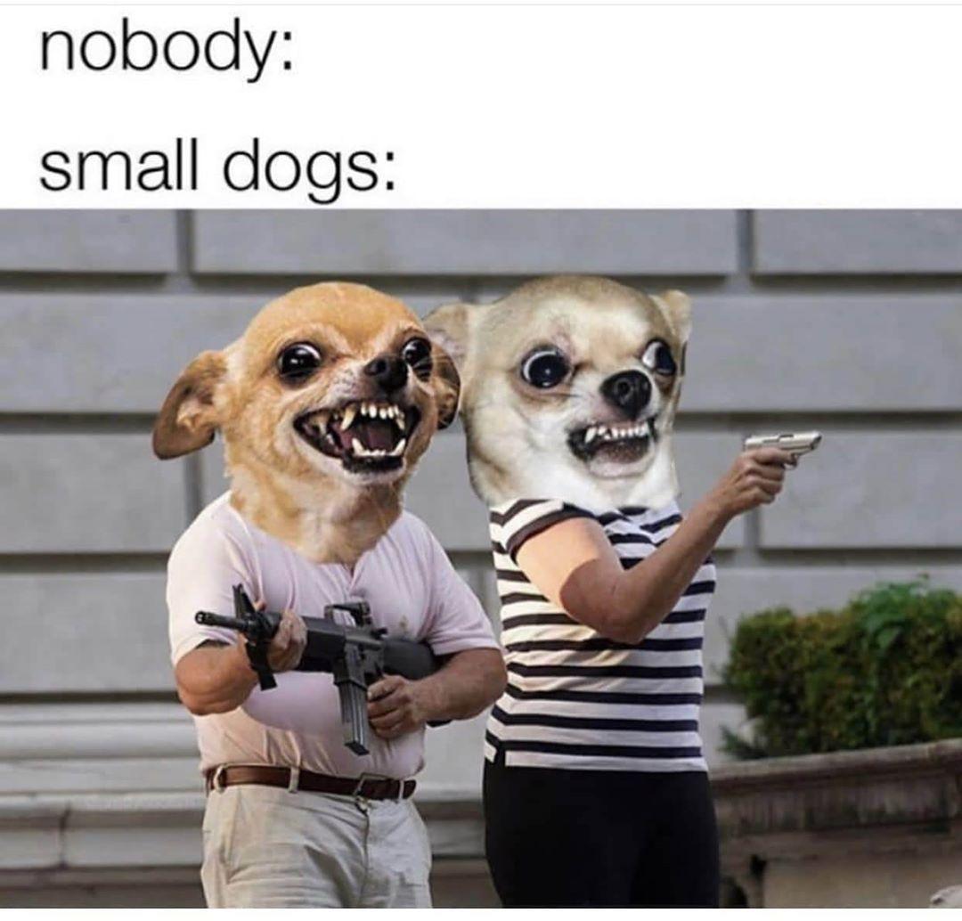 Imgur On Instagram Protect The Ankles Really Funny Memes Dog Memes Animal Memes