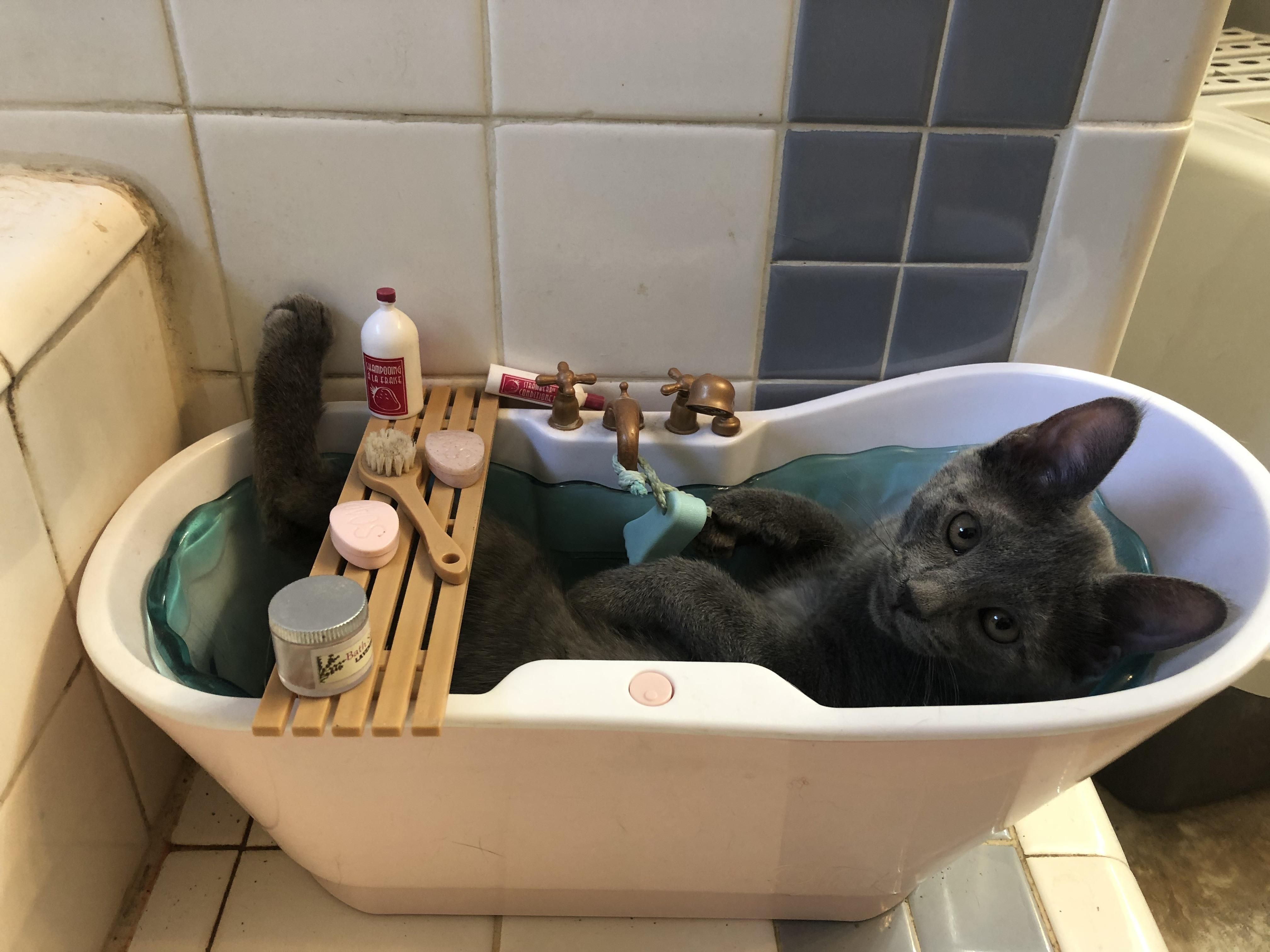Real Estate Marketing Reviews One Of Our Kittens Only Sleeps In My Daughters Doll Bathtub In 2020 Cat Post Kittens Funny Cats