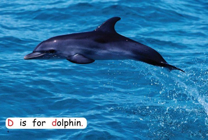 Pre-Reading - What Do You Know About Dolphins What Is This Dolphin Doing List Verbs -2716