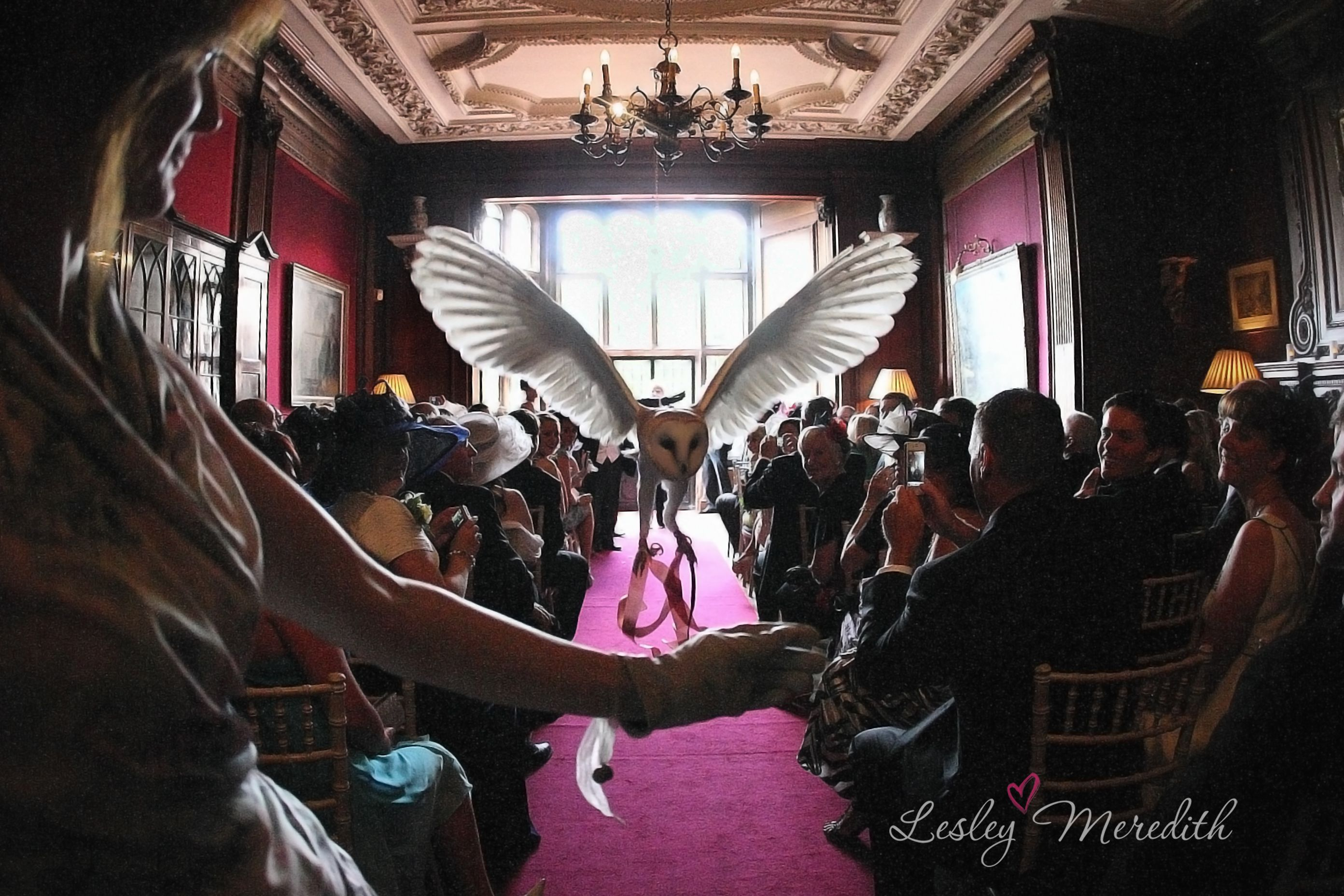 Wedding Owl Flying The Knot Barn Owl Ring Bearers Wedding