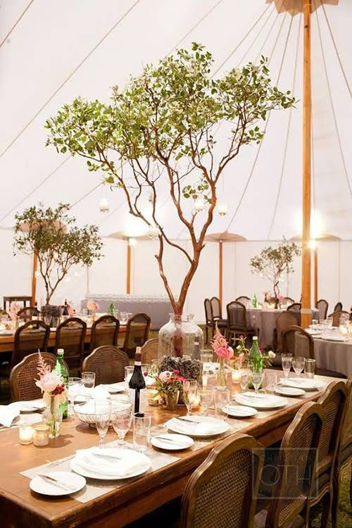 6 Ways To Decorate A Wedding Reception Tent With Trees