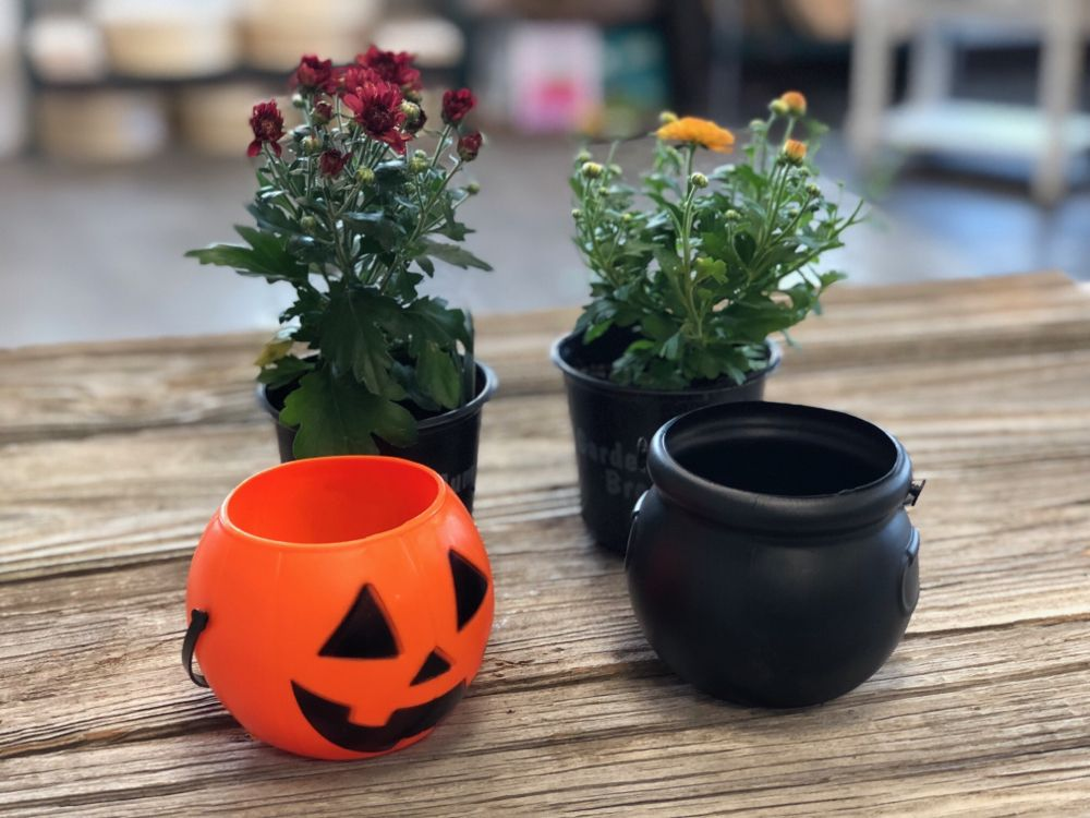 Easy and adorable mini mum planters for less than 2 get