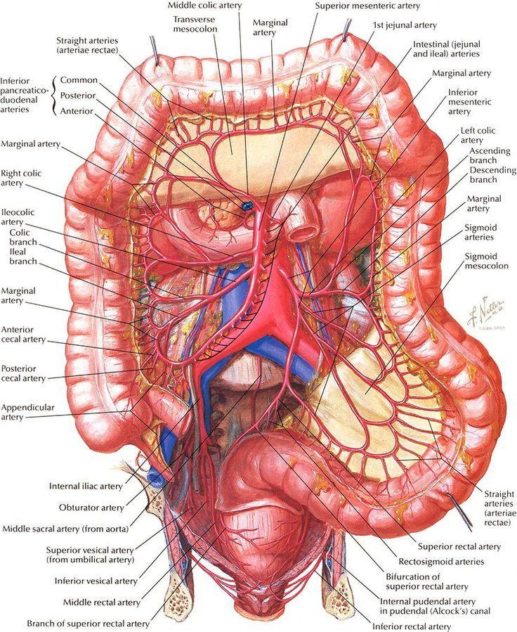 Intestine Nursing School And Education Pinterest Anatomy