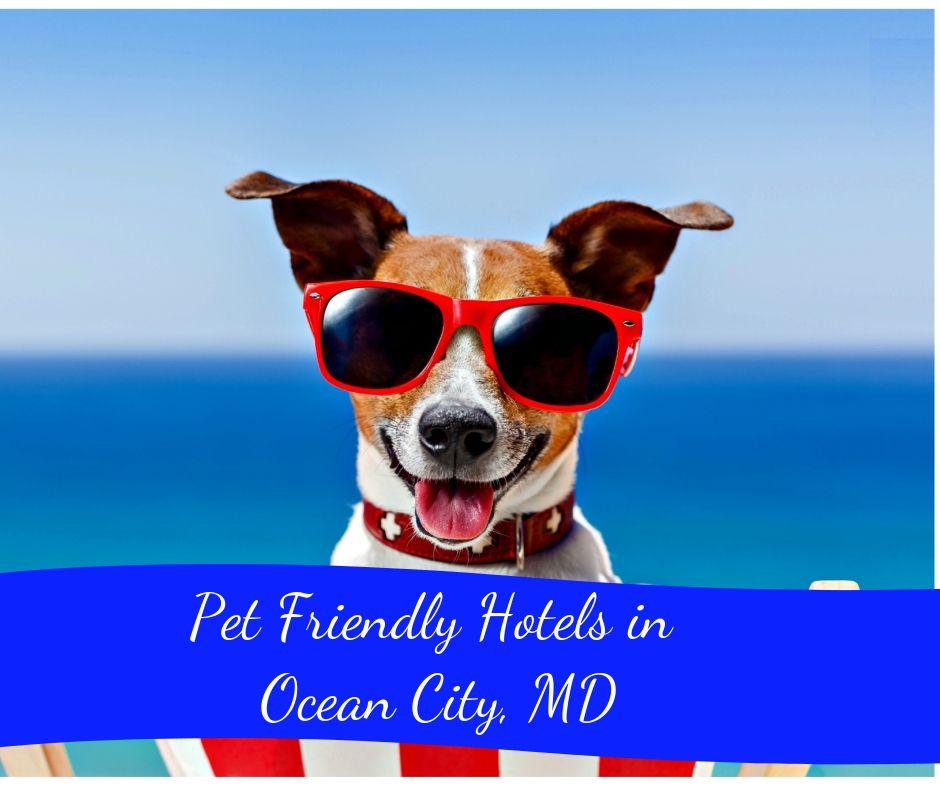Single Post Pet Friendly Hotels Ocean City Pets