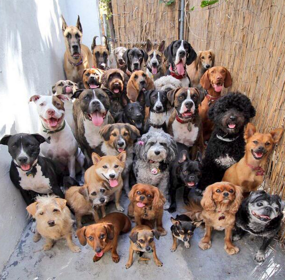 like a ton of dogs Google Search Cute animals, Cute