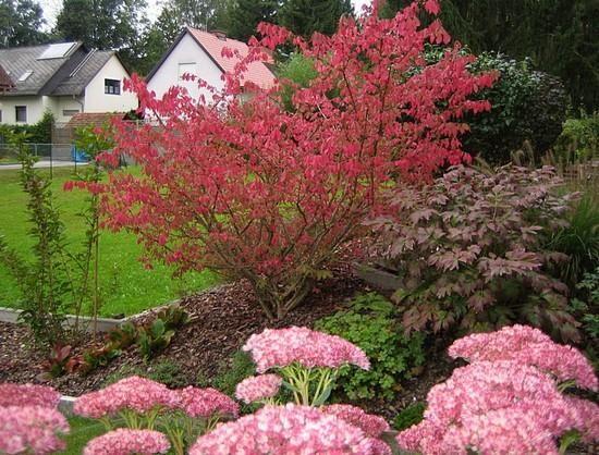 Hilfe Bei Gartengestaltung sonniger und trockener standort ich benötige mal wieder hilfe