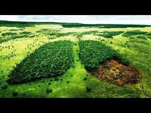 To Stop Amazon Deforestation, Brazilian Groups Take Bolsonaro to Court  9f08e58af40dac8580295192ead0df50