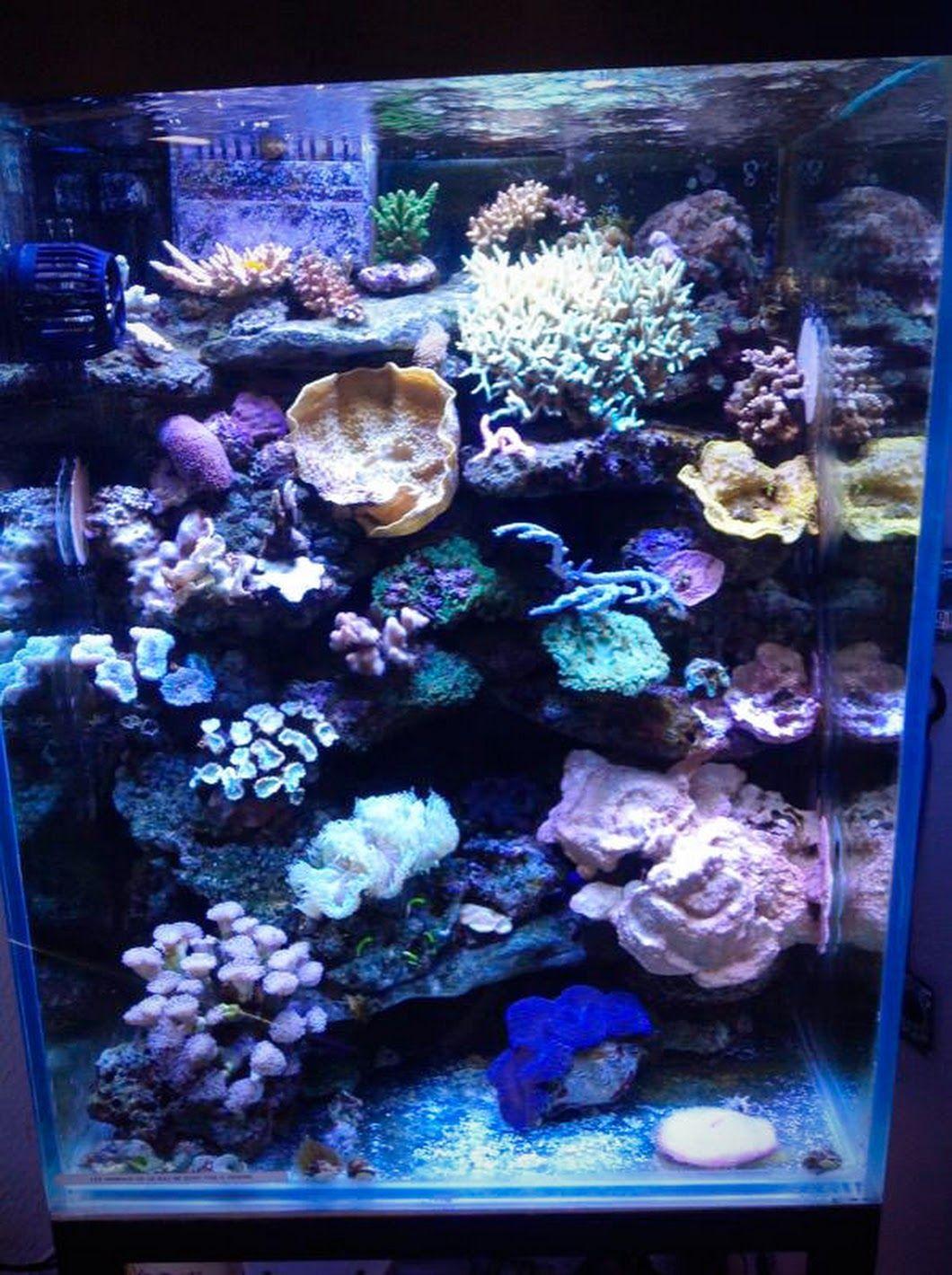 Aquarium eau de mer installé et entretenu par #Aquarium Services ...