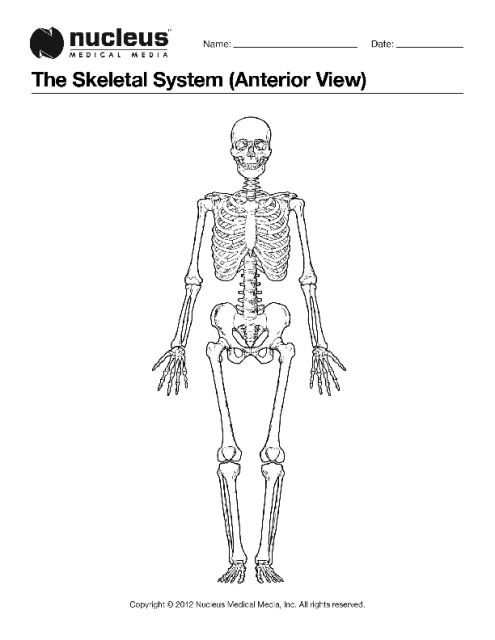 This Anatomy Coloring Book Page Depicts The Entire Skeleton From The Anterior Front View Color Worksheets Skeletal System Anatomy Coloring Book