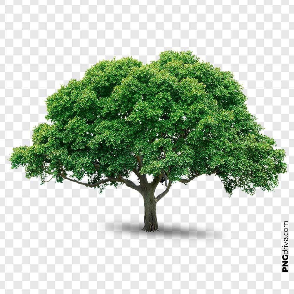 Big Green Natural Tree Png Drive In 2021 Big Green Tree Green