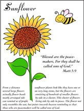 Sunflower Coloring Sheet for Sunday School for Beatitudes Lesson ...