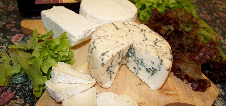 סדנת גבינות