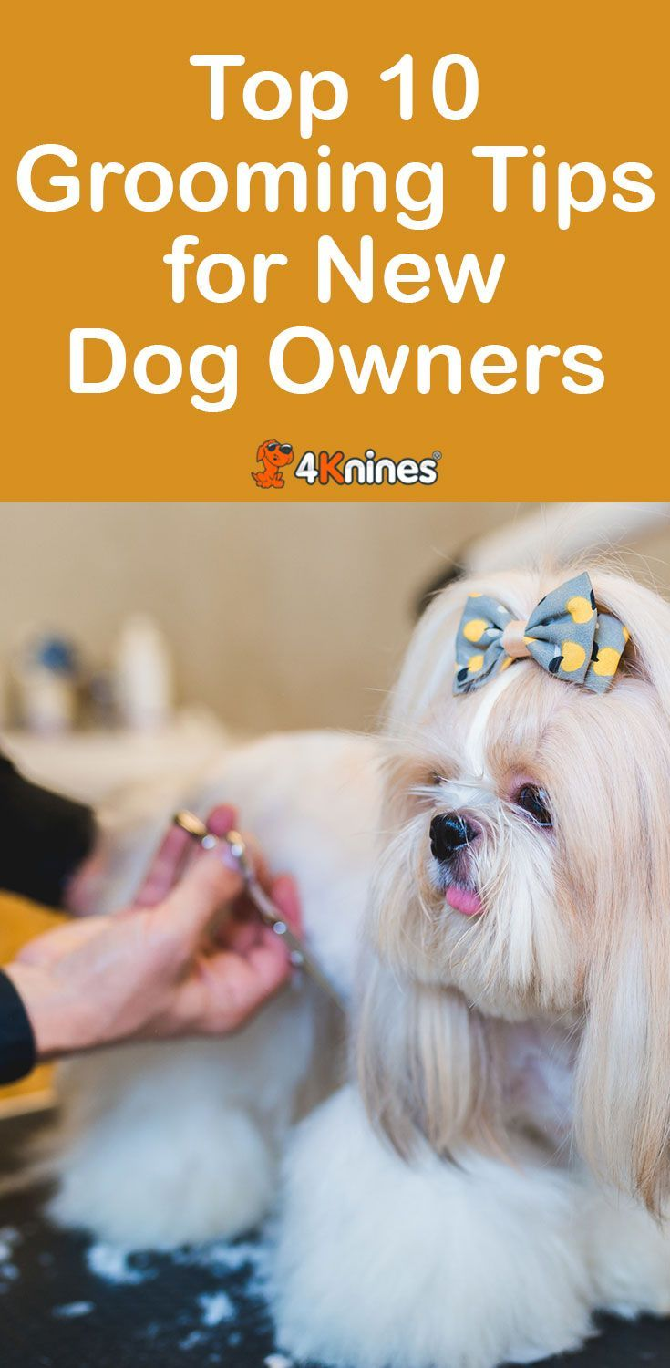Some Helpful Dog Grooming Tips for New Owners