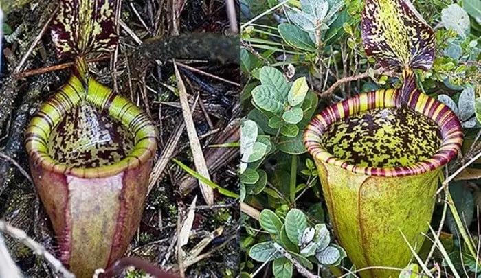 صور لأندر أنواع الزهور في العالم شبكة ابو نواف Plants Projects To Try World