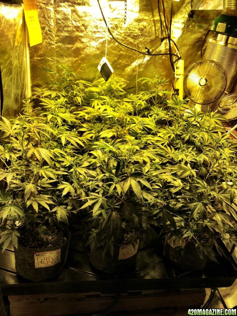 Supercloset, Who Are The Leading Manufacturers Of Fully Automated Grow  Tents, Grow Cabinets,