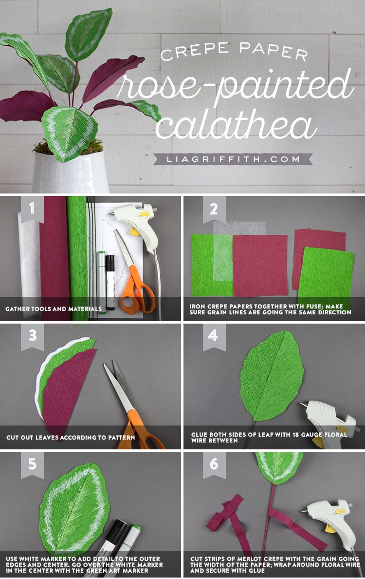 Photo of Make an easy crepe paper calathea plant for your home