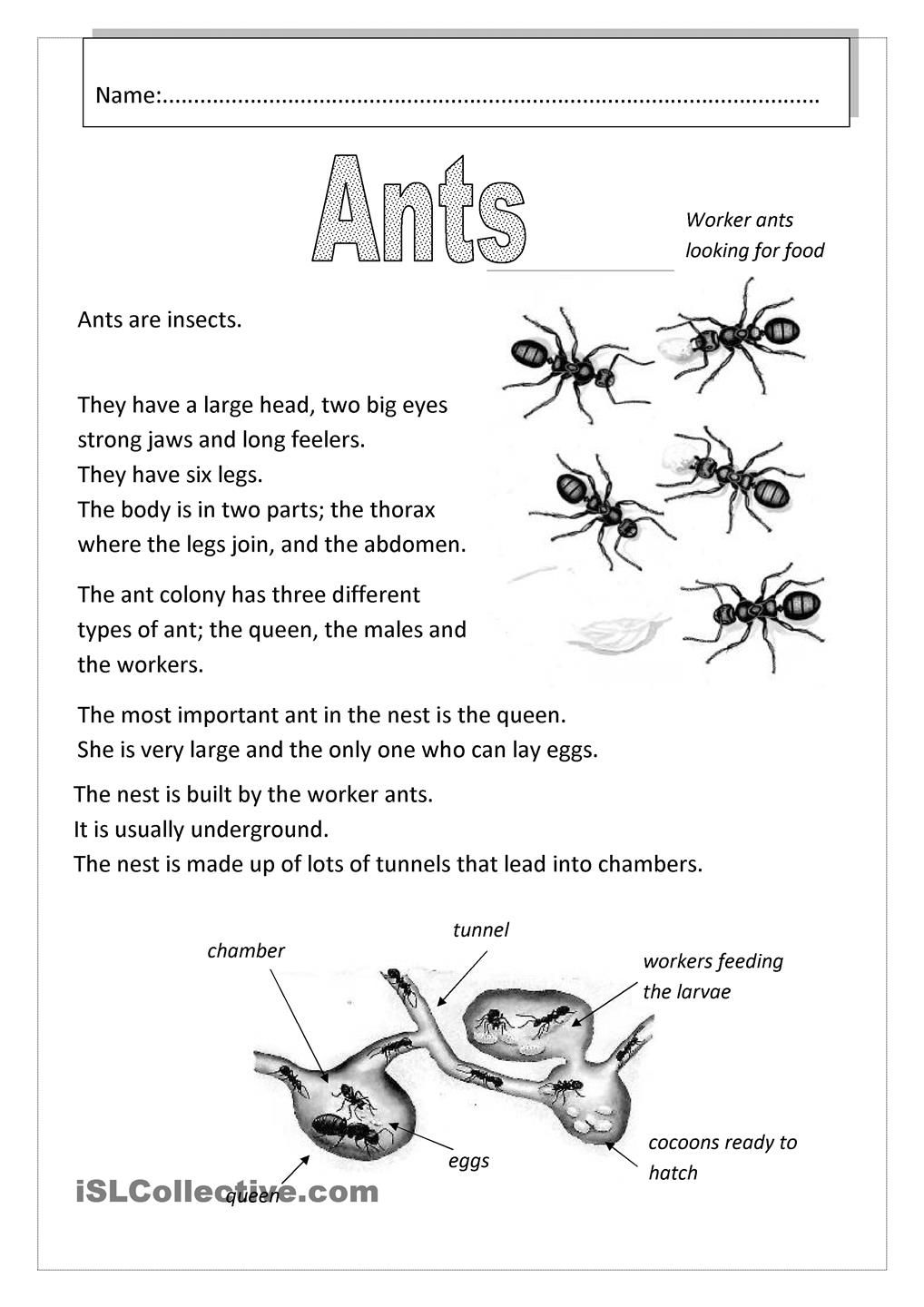 Ants With Images Ants Worksheet Ants Ants Activities