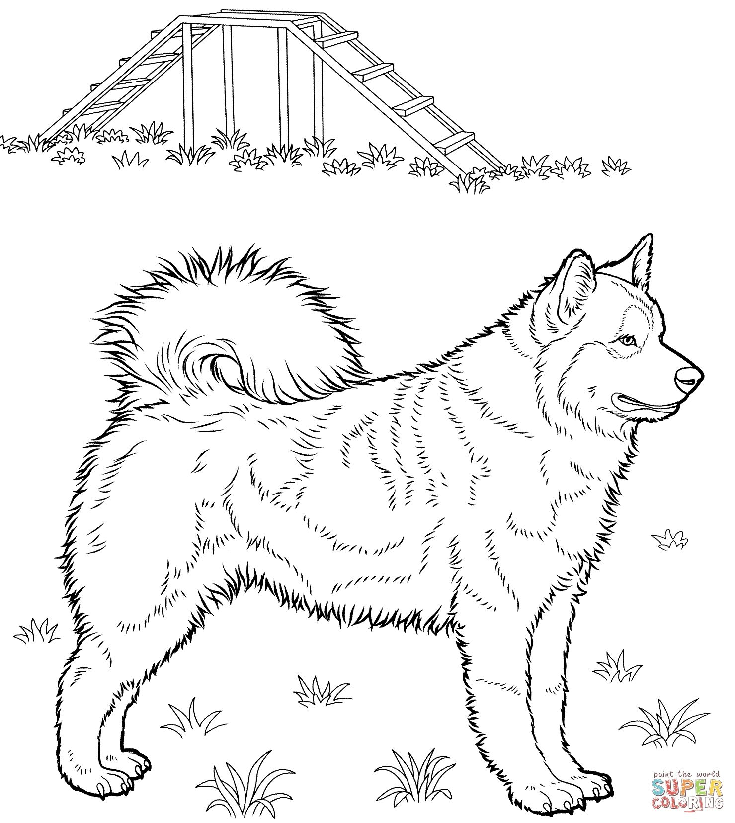 Brilliance Husky Coloring Page Free Printable Coloring