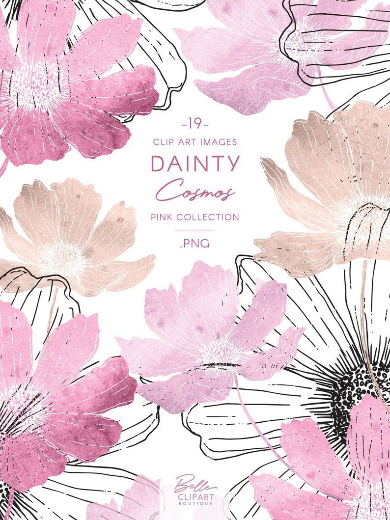 Cosmos Flower Clipart Pink Watercolor Illustration Line Art Etsy In 2020 Watercolor Illustration Flower Clipart Pink Watercolor
