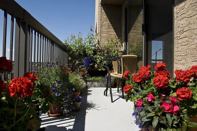 Plants For South Facing Sunny Balcony Garden
