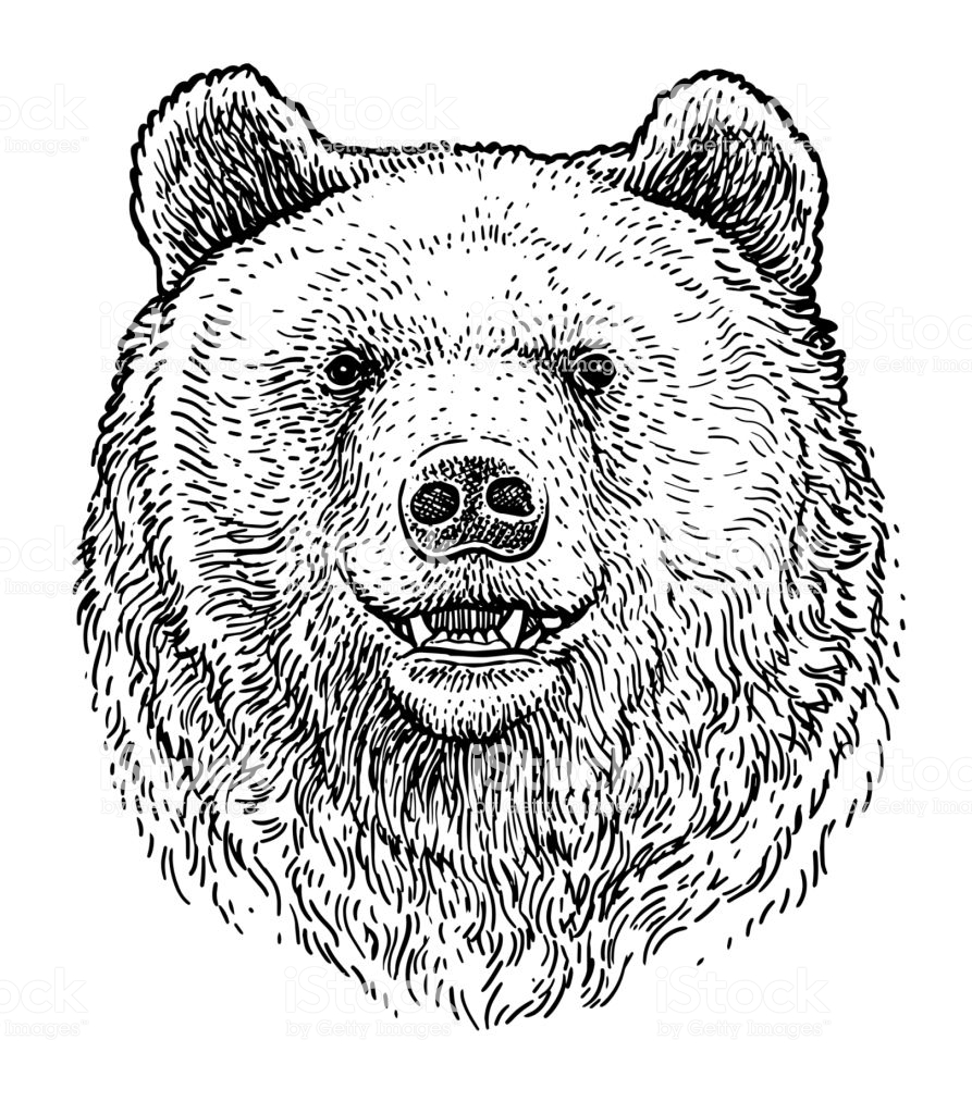 Illustration What Made By Ink And Pencil On Paper Then It Was Bear Illustration Bear Face Drawing Bear Art
