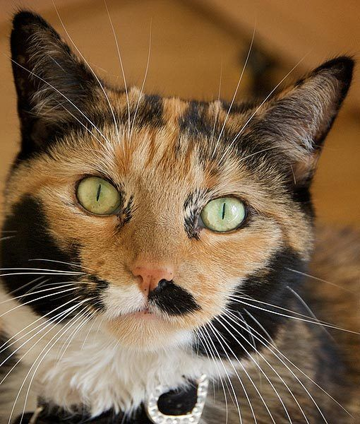 This cat doesn't care if its mustache is black or white, as long as it's well-coifed, which it obviously is.