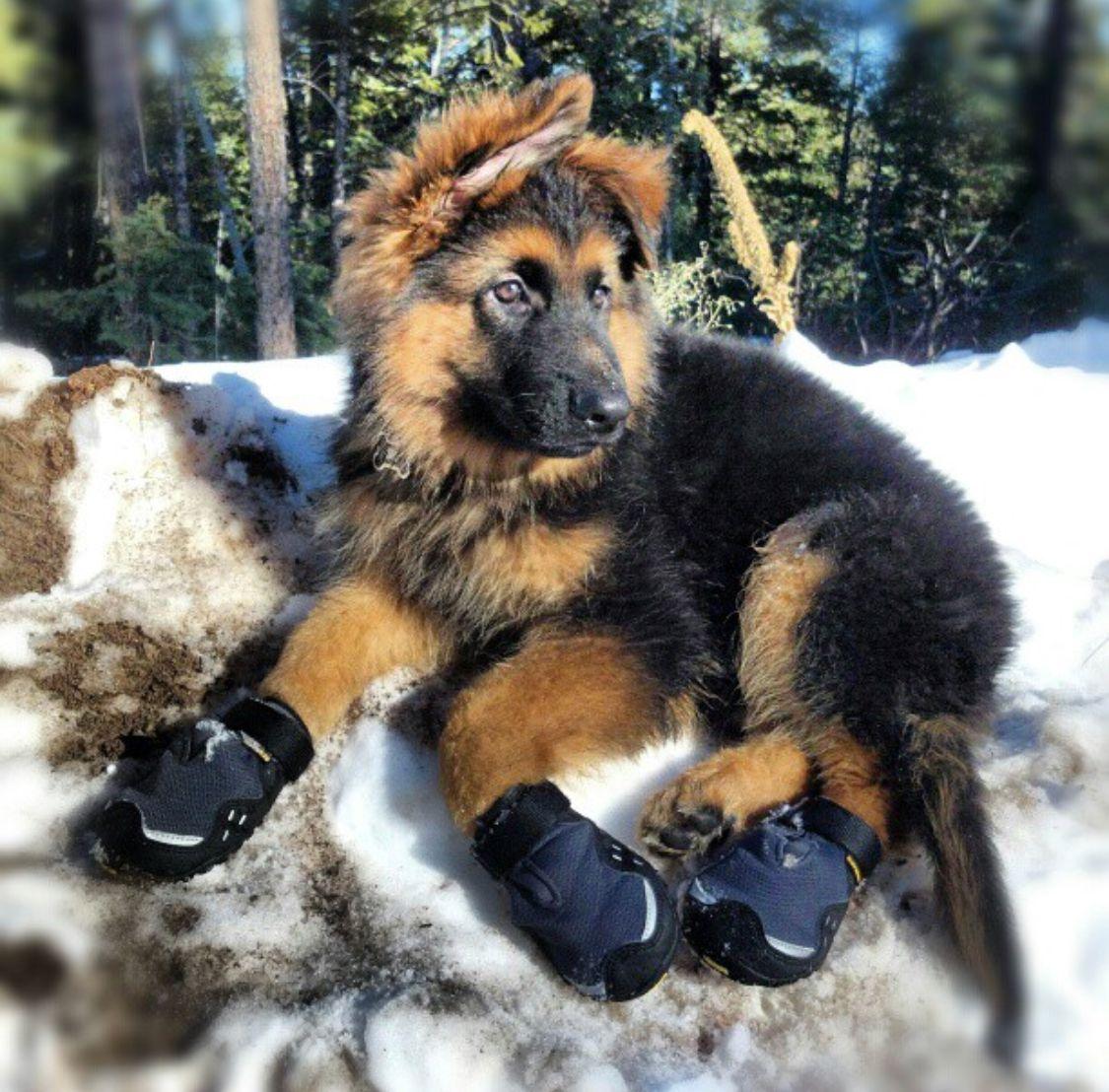 Cutest Puppy Ever Gibbs As A Pup Duck Creek Village Utah Peek
