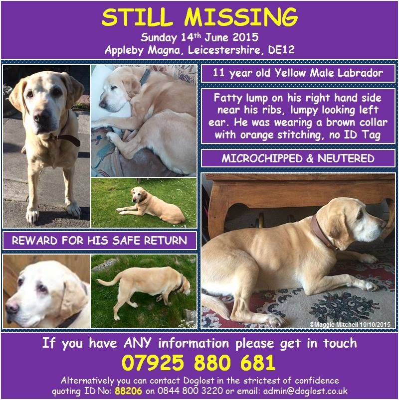 Pin By Stolen And Missing Pets Allian On Missing Dogs Losing A Dog Cat Uk Dogs