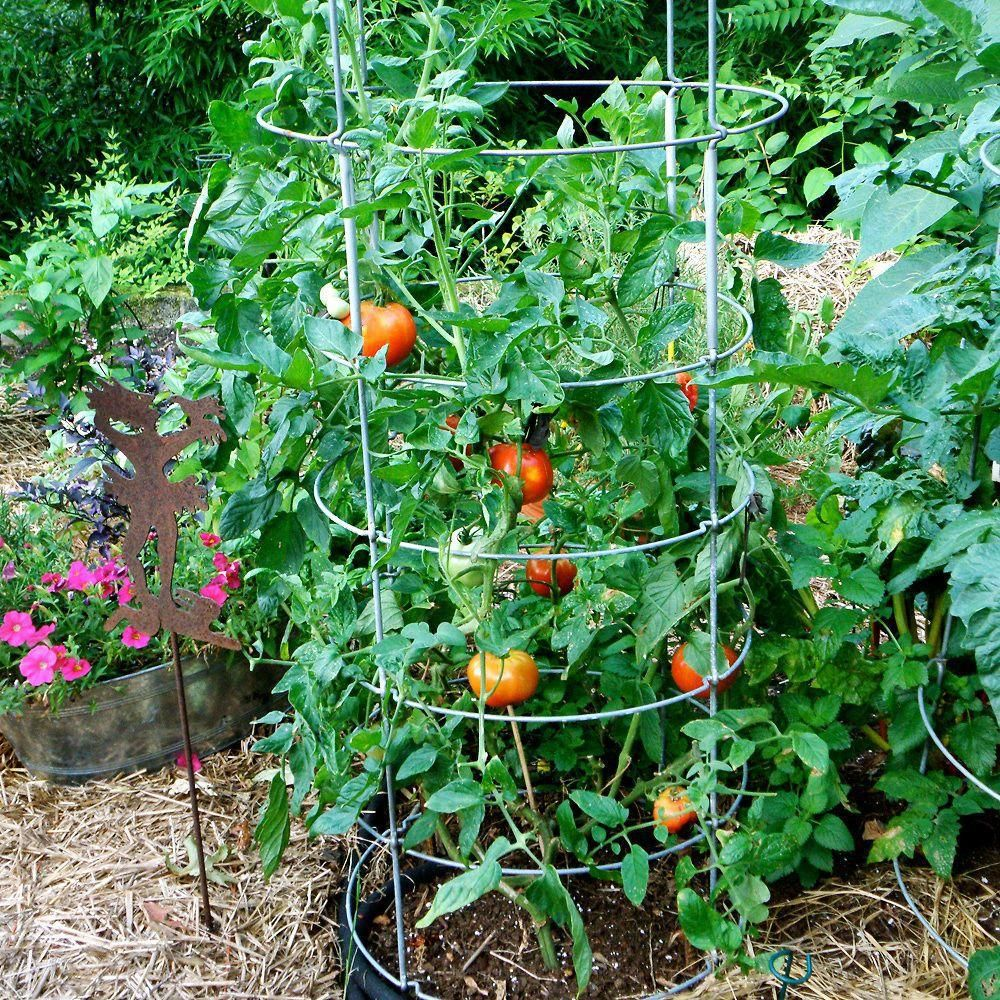 Bonnie Plants 4 5 In Better Boy Tomato 0201 The Home 400 x 300