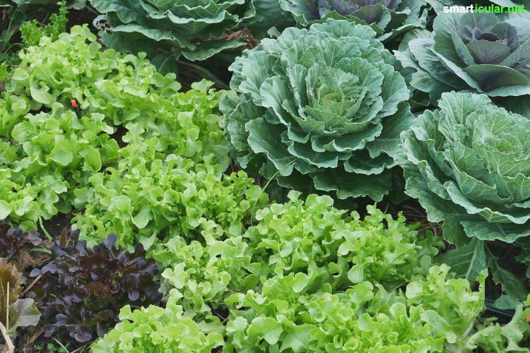 Ernten Statt Jaten Essbare Bodendecker Zur Unkrautbekampfung Garten Anpflanzen Garten Bepflanzen Pflanzen