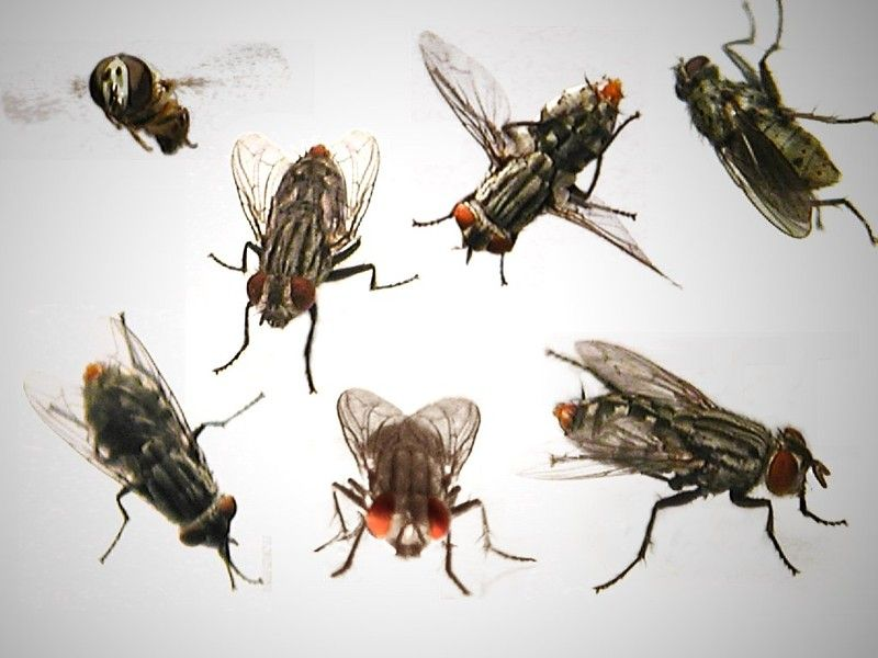 Unusual Ways To Get Rid Of Flies From Your House Or Picnic Get Rid Of Flies Pest Control Eco Pest Control