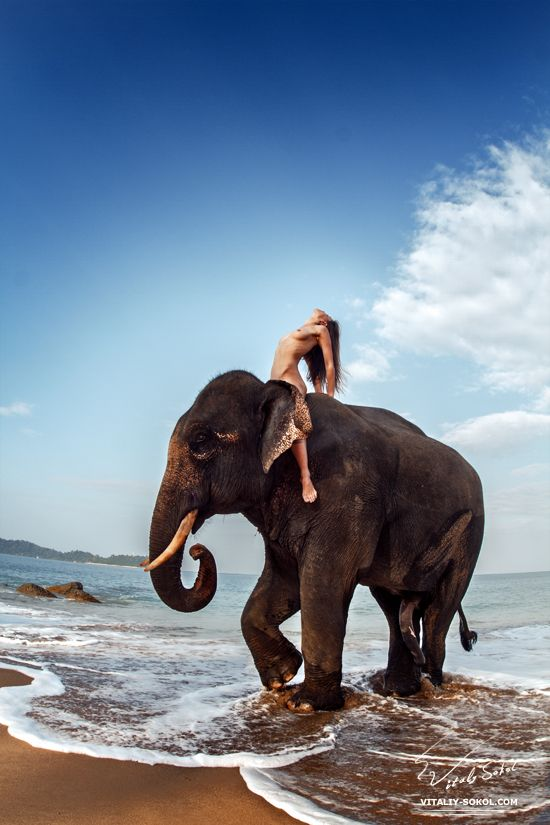 Share Nude women and elephants phrase and
