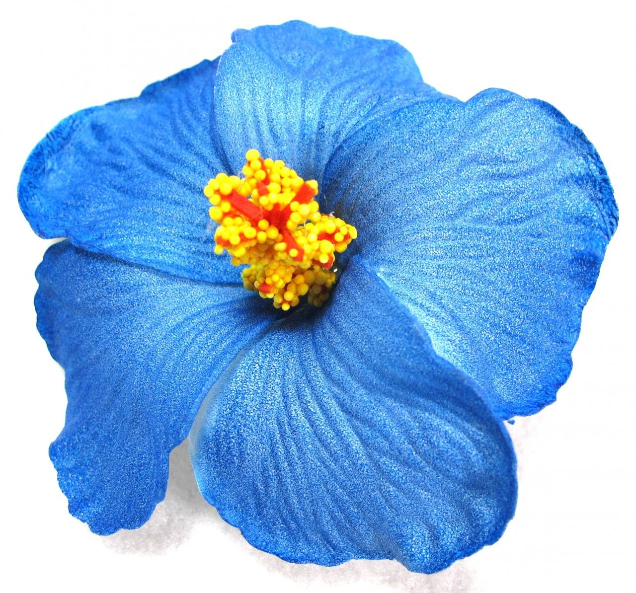 Blue Hibiscus Flower Google Search Flowers Pinterest Blue