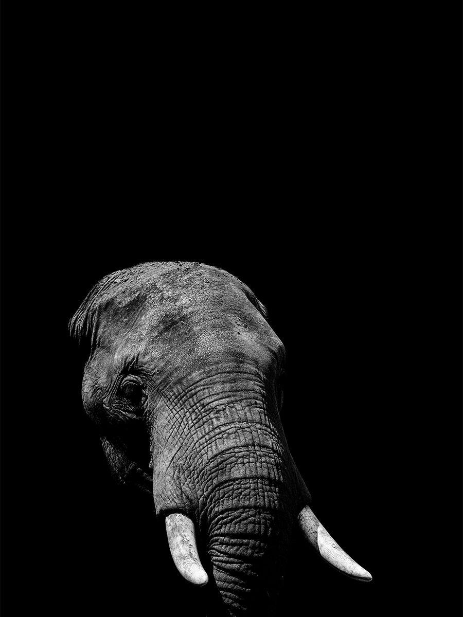 Black White Animal Wall Art Prints Elephant Lion