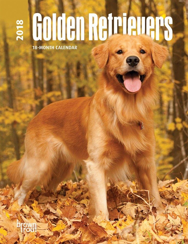 Golden Retrievers 2020 Engagement Golden Retriever Dog Breeds