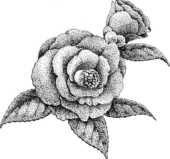 花のフリーイラスト 椿 白黒モノクロ 自由 絵画水彩イラスト