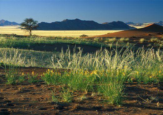 Wüste und Grün