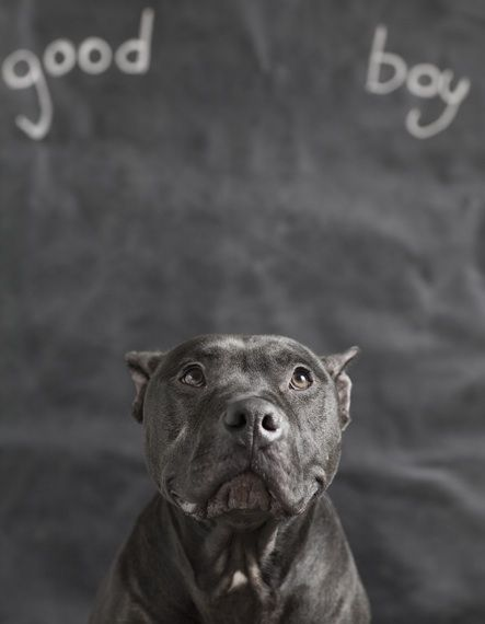 What Is Breed Specific Legislation Dog Photography Rescue Dogs Dog Milk