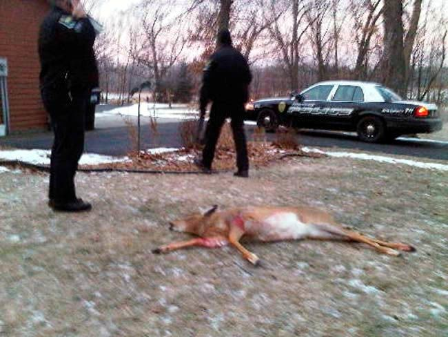 STOP TAME DEER FROM BEING SHOT BY WILDLIFE OFFICERS Tame wildlife, like deer, can be dealt with in a humane manner. Shooting an animal that is not a threat is despicable!