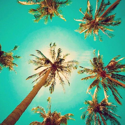 tropical tumblr - Google Search