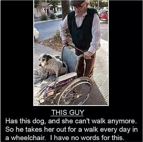 Even the elderly help their elderly pets