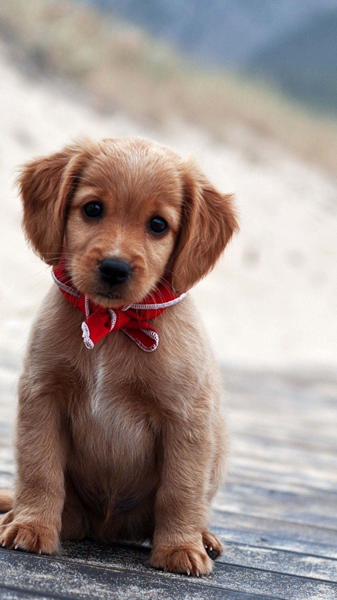 Pics Of Puppies Wallpaper Android - Best Android Wallpapers