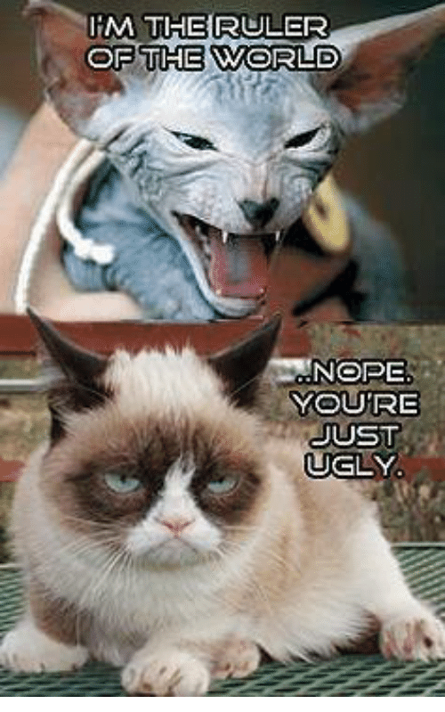 Best Cat Quotes For Every Occasion