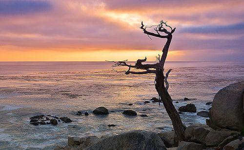 Monterey News Events Happenings Monterey Ca Blog California Travel Road Trips Monterey Ca California Coastline
