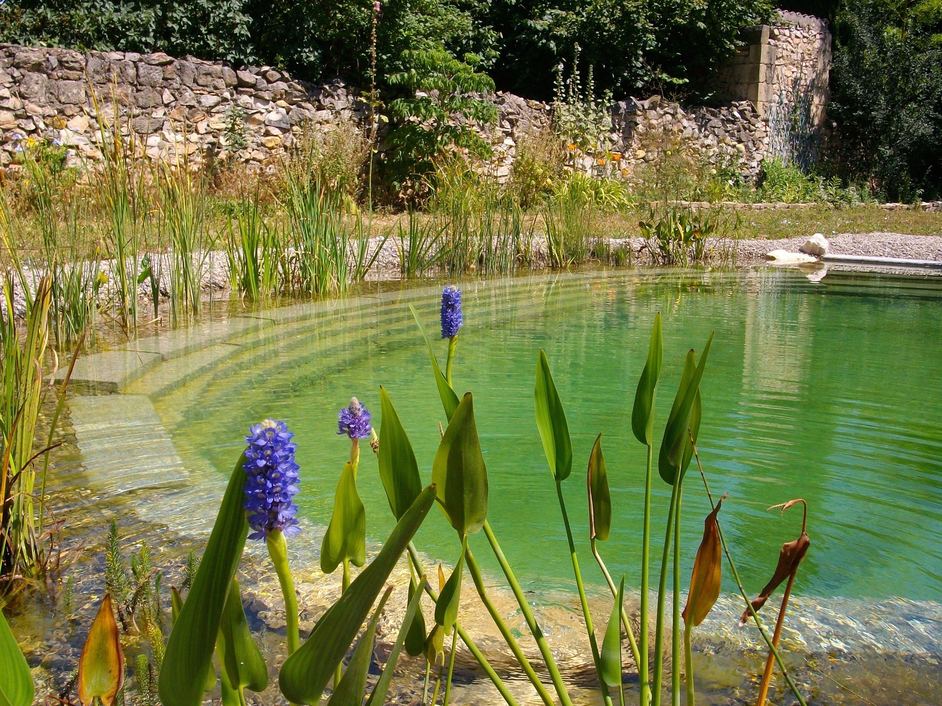 Une piscine naturelle un jardin aquatique dans lequel il fait