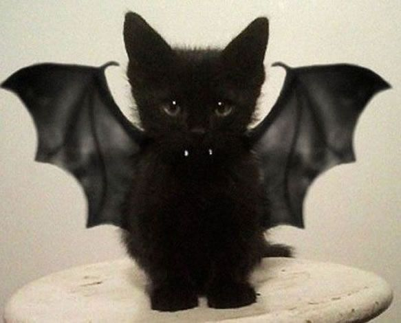 30 awesome dog and cat halloween costumes slideshow - Halloween Costumes For Kittens Pets