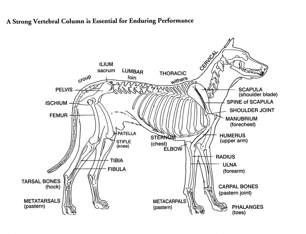 Dog Bones Diagram - Online Schematic Diagram •