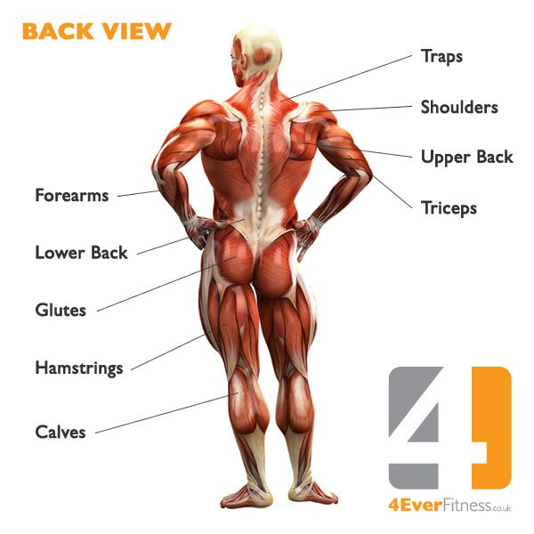 Pin By B On Muscle Pinterest Human Body Muscles And Fitspiration