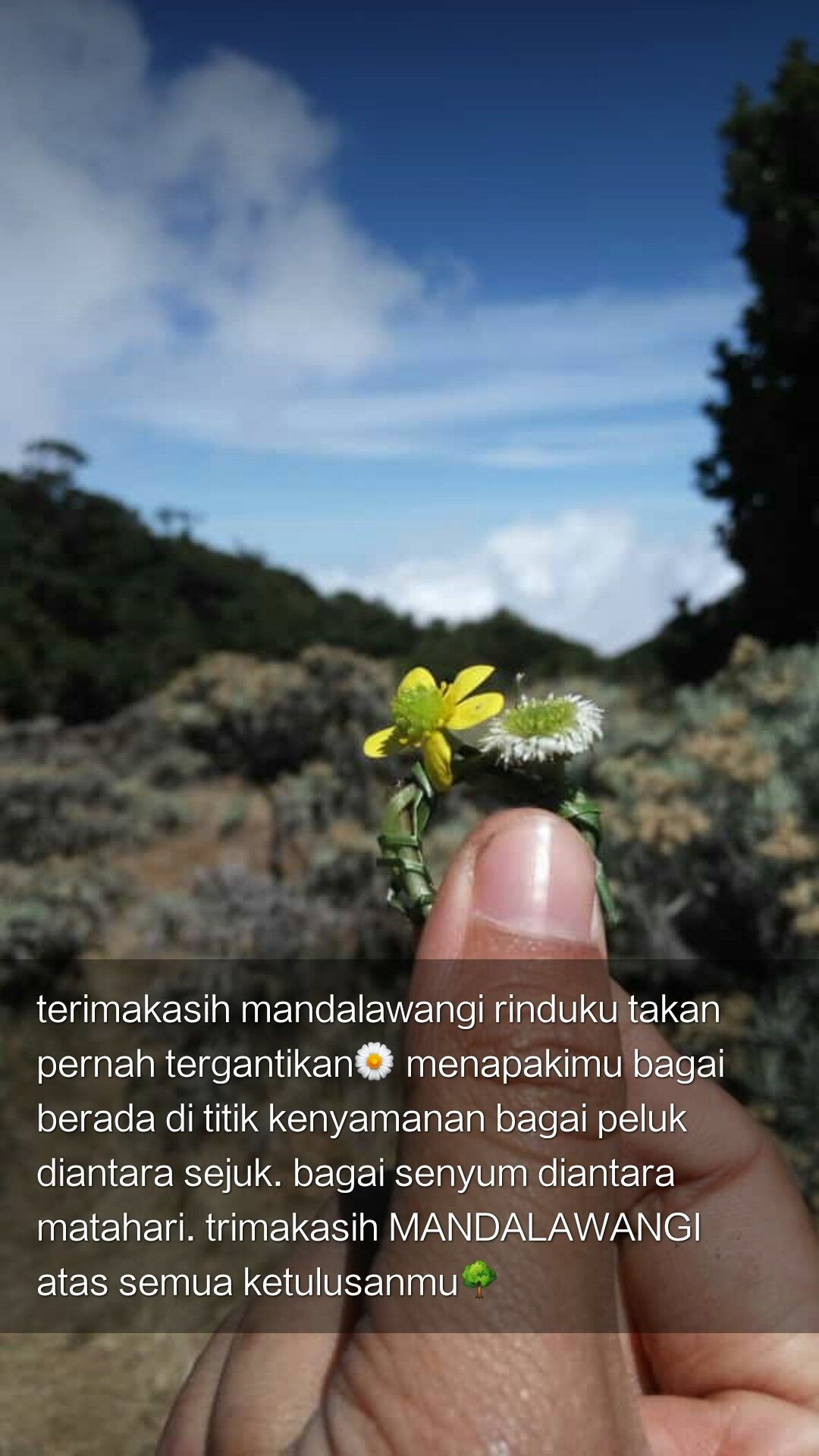 Pangrango Mountain Flowers Edelweis Nature Quotes Love Journey Bersyukur Hard Travelin Nature Quotes Nature Places To Visit