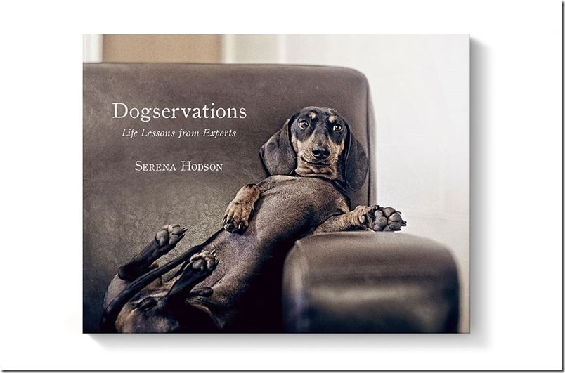 Dogservation! The Book! Serenah Hodson / serenah photography